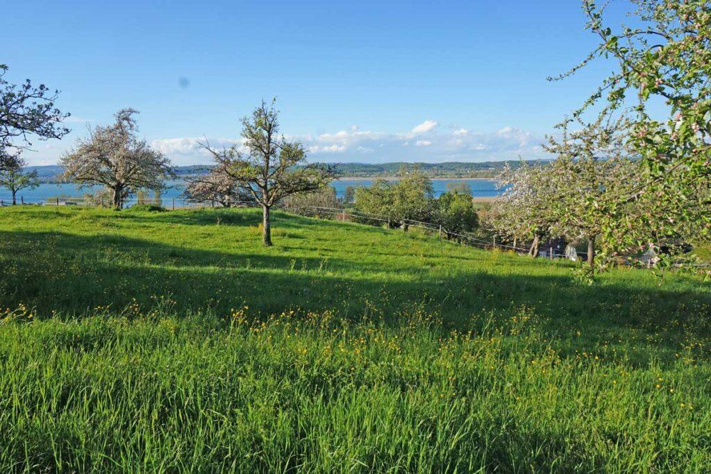 Grundstück Kaufen In Triboltingen Seesicht Ermatingen Immobilienmakler